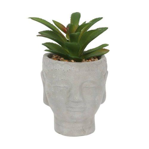 buddha head plant
