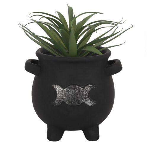 cauldron plant pot